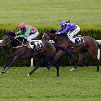 horse-racing-1577292_1280